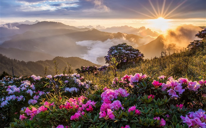 早晨的风景,日出,山,花,云 高清壁纸 | 风景| 桌面 |